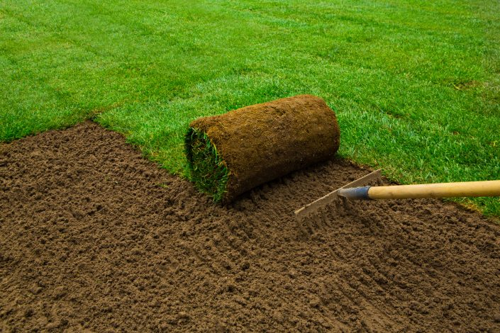 Polagamo samo najkvalitetnejšo travo v rolah brez plevelov itd.