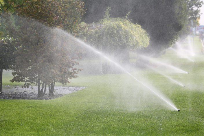 Da bodo rastline dobro uspevale potrebujejo veliko vode