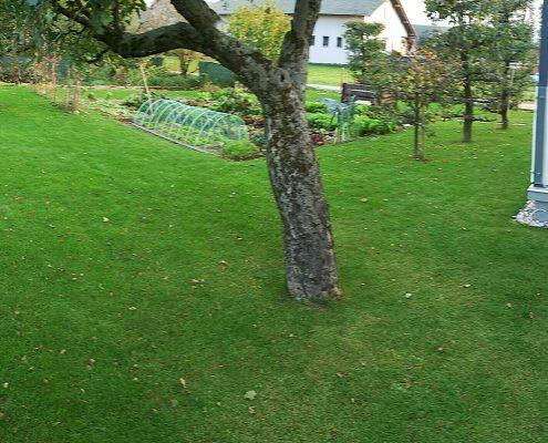 Lepa zelenica in izredni rastni rezultati v kratkem času z kvalitetnimi travnimi mešanicami
